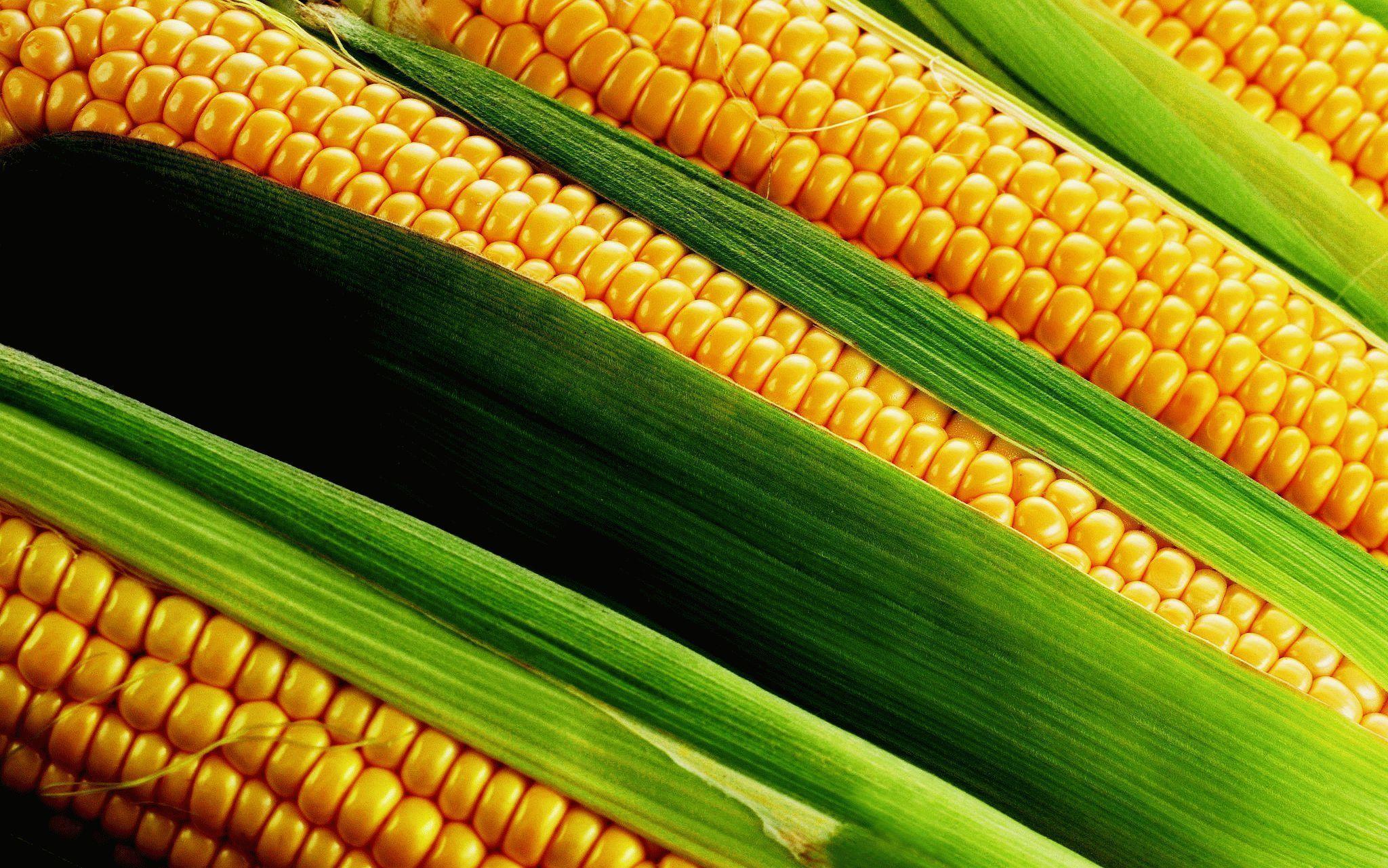 Corn Wave Analysis – 10 December , 2018