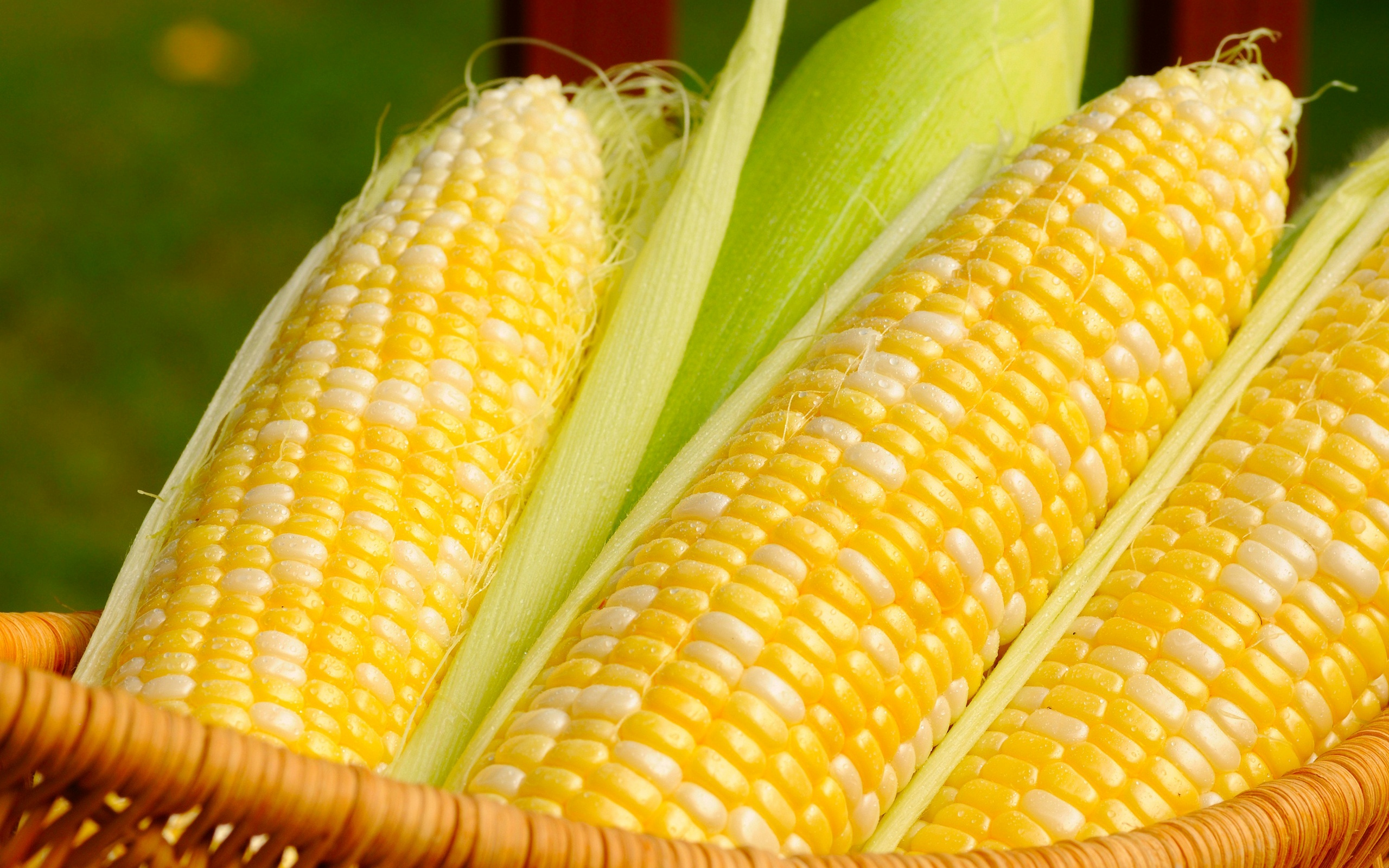 Corn Wave Analysis – 14 June, 2019