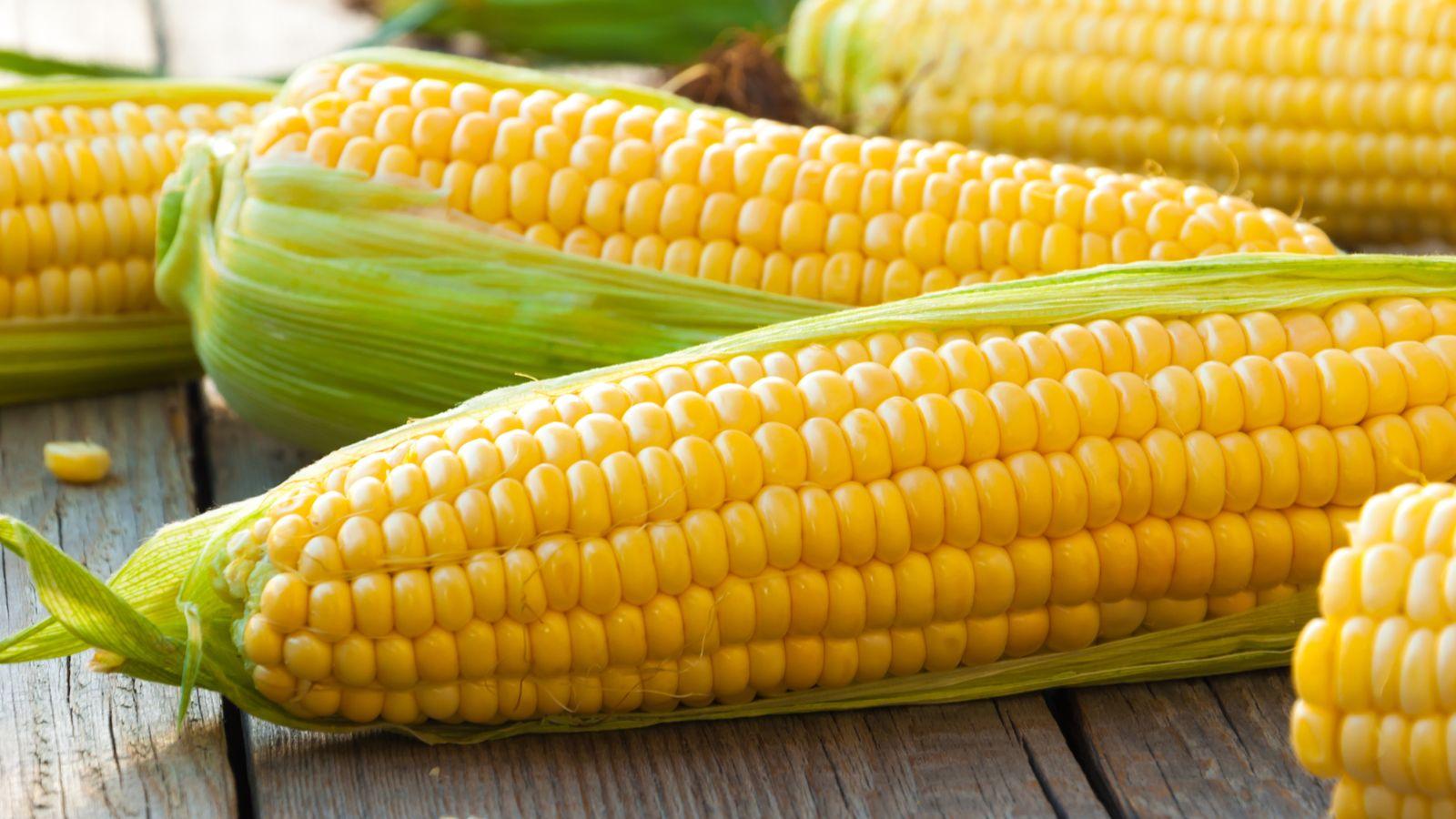Corn Wave Analysis – 6 June, 2019