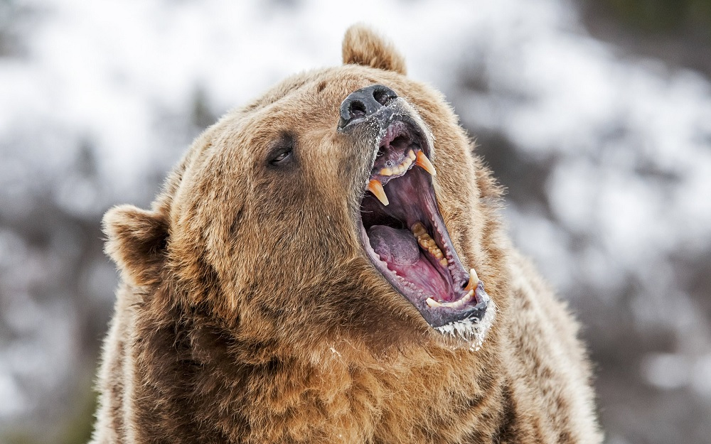 Bitcoin Price Breaks Below $8,500, Are Bears In Complete Control?