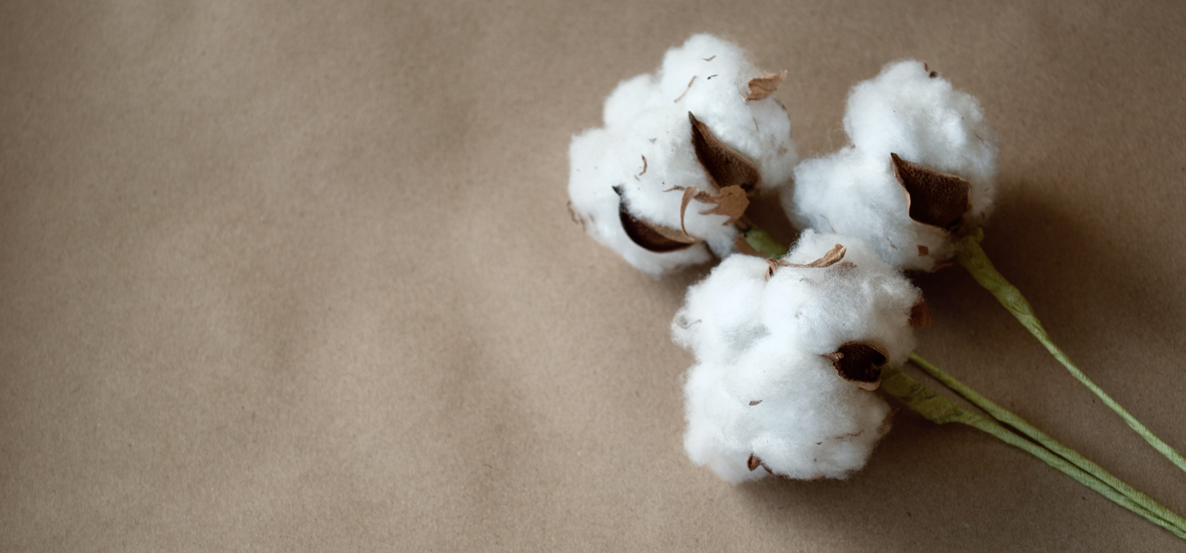 Cotton Wave Analysis – 23 December, 2019